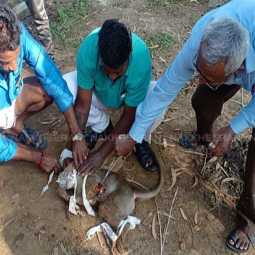 VELLORE HIGH MONKEY INCIDENT PEOPLES HELP