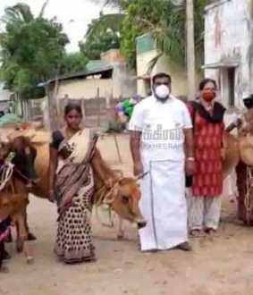 dairy cows - Sikkal Co-operative Society President - Nagapattinam
