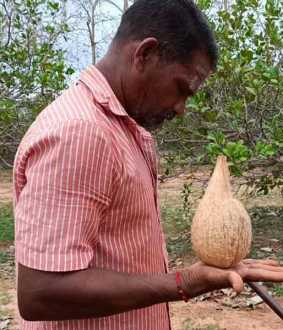 Area Cultivators for 'Coconut Rolling System'