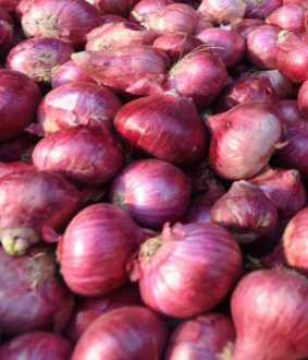 all types of onions union government decide