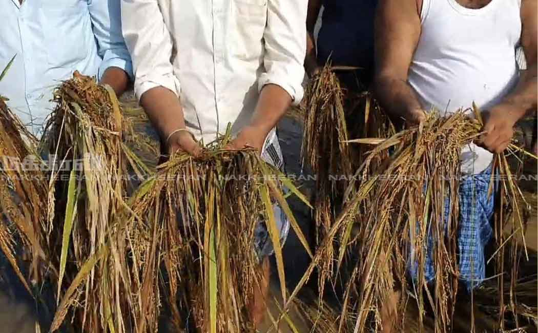 Farmers protest against officials for not counting crop damage ...