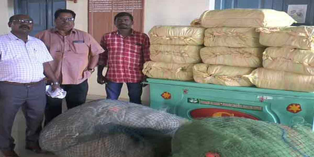 600 kg of cannabis seized in one day in Tamil Nadu