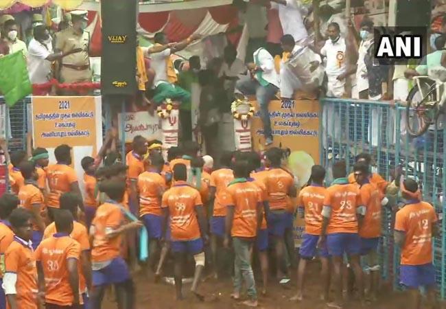 avaniyapuram jallikattu peoples pongal festival