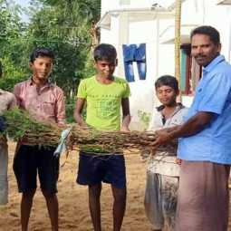 New effort of young people to remove karuvelam trees