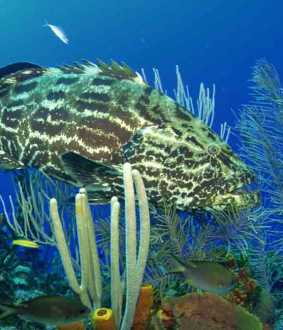 new creatures found in mannar gulf