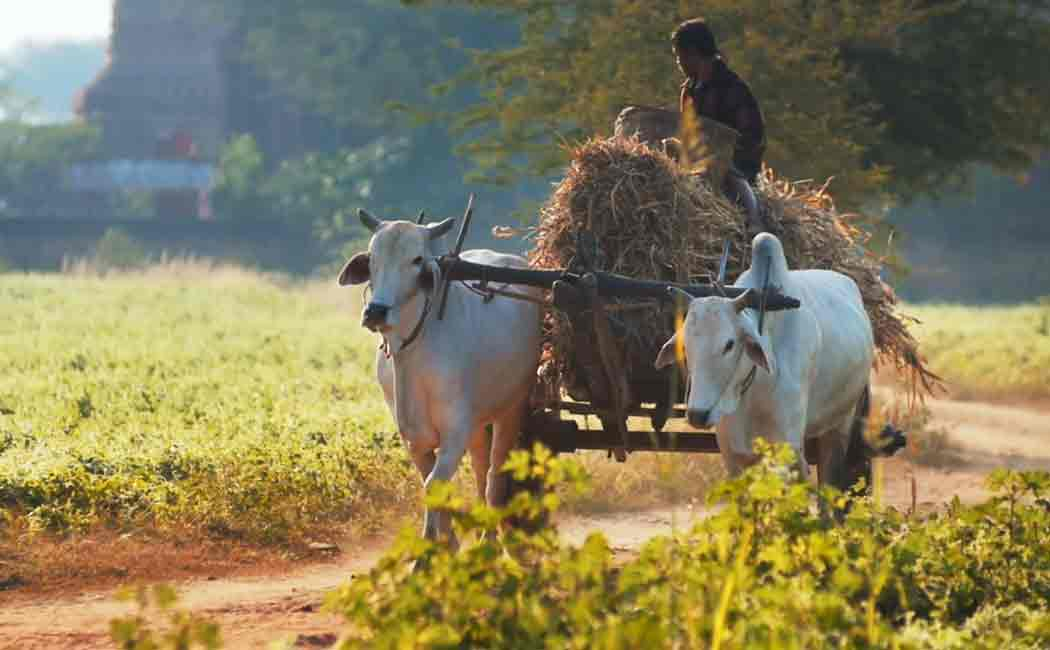 bullock cart fined in dehradun