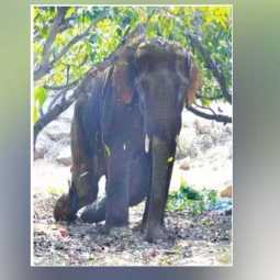 krishnagiri district elephant incident doctors and forest officers