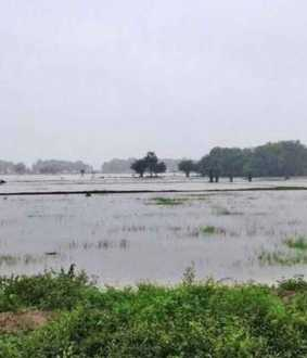 crops damaged due to rain in delta districts