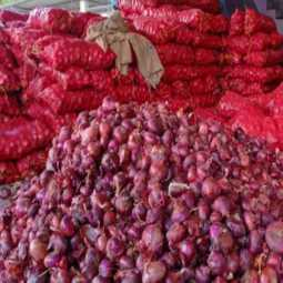 import onions Egypt trichy onion shops raid peoples not like egypt onion