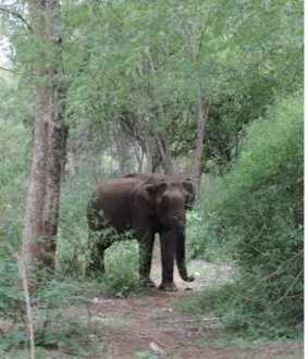 ERODE FOREST AREA ELEPHANT INCIDENT FOREST OFFICERS