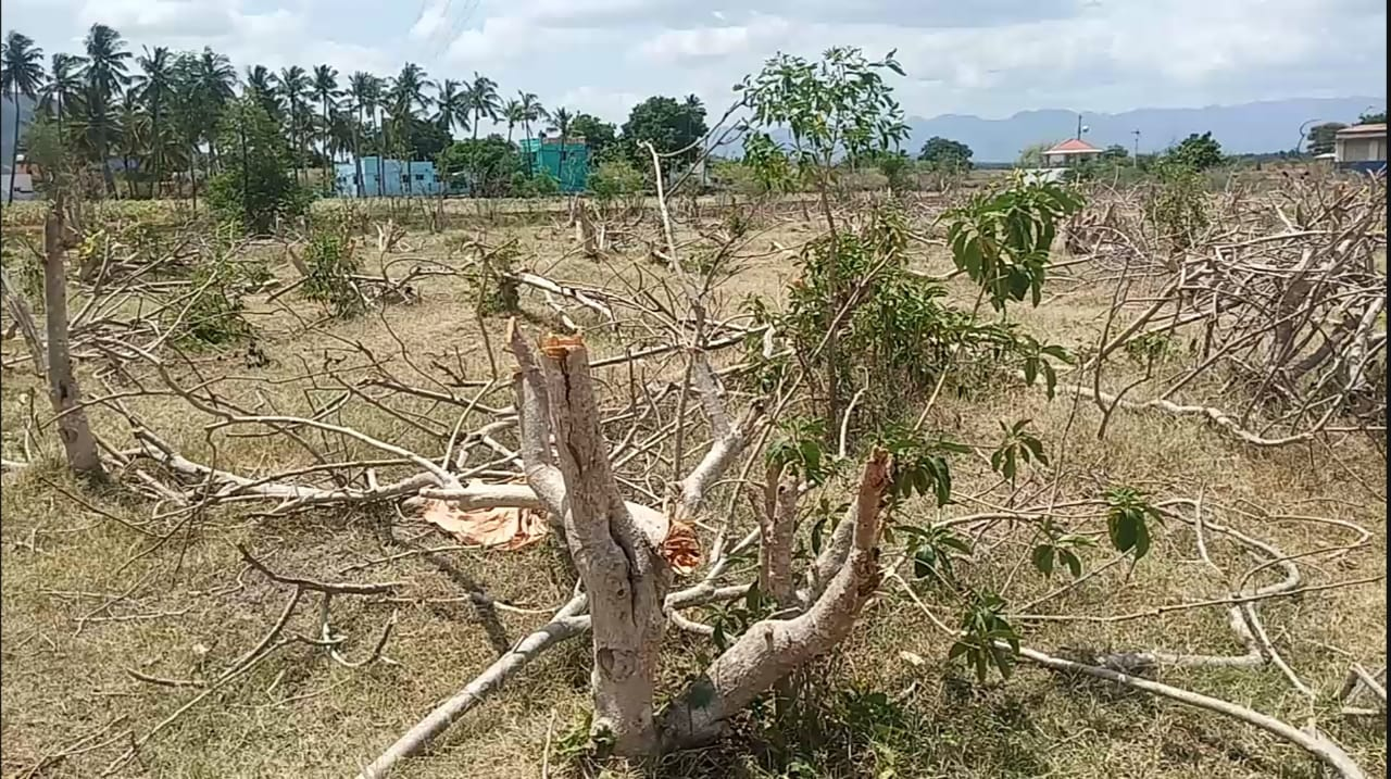 Farmers cut and thrown the trees