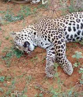 cheetah thirunelveli