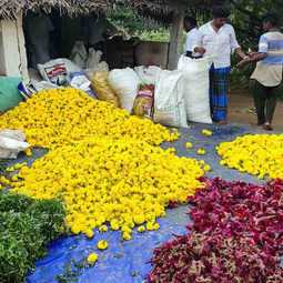 Went into the trash last week in flower   Flowers are on sale today for Rs 200.