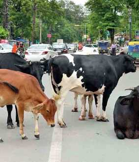 uttarpradesh amendment to protect cows