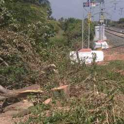 Railway Administration for Cutting Trees Nature enthusiasts suffer!
