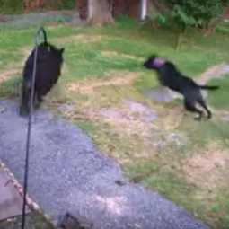 viral video of dog chasing bear in newjersy town