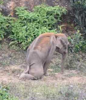 incident in valparai...  mother elephant in strike