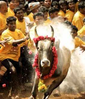 jallikattu tamilnadu government released the gazette notification