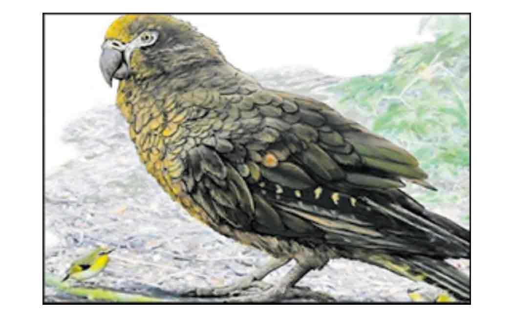 giant parrot existed 19 million years ago