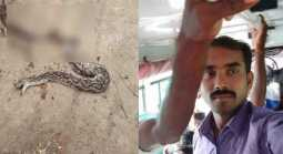 Snake bite conductor death in thanjai