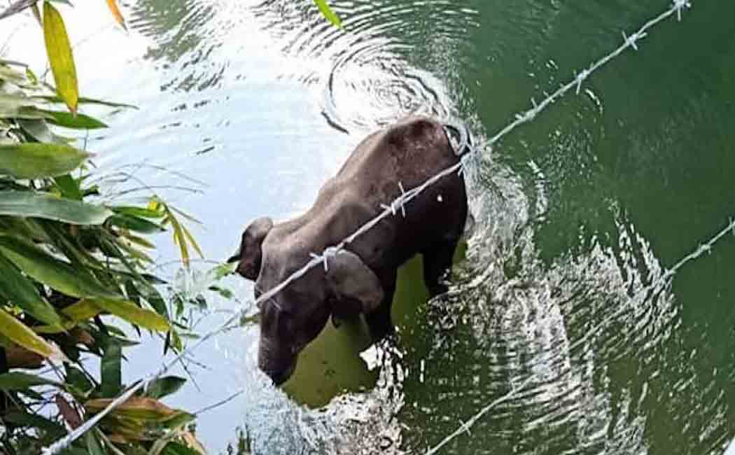 kerala elephant issue interrogation