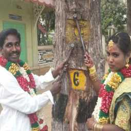 Newlywed couple remove nail in trees