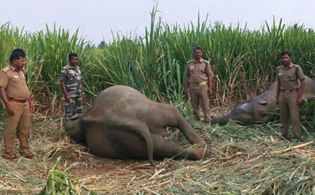 Erode Wild elephants issue