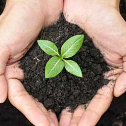 33 crore seedlings to be planted in maharastra