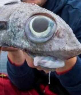 alien like fish caught in norway