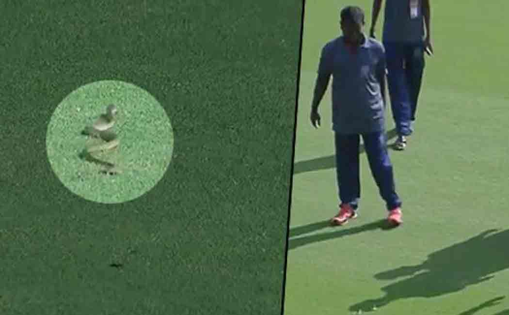 snake disturbed ranji cricket