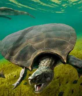Car-sized prehistoric South American turtle fossil found