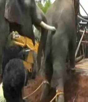 The forest department captures the wild elephant ... a plan to release to dense forest!