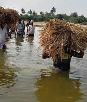 cuddalore district, virudhachalam farmers in trouble